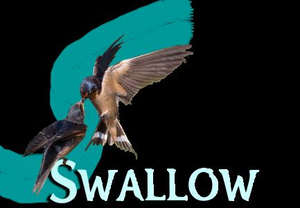 Swallow Media